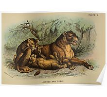 A Handbook to the Carnivora Richard Lydekker 1886 0042 Lioness and Cubs Poster