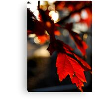Autumn Red - Parker, CO Canvas Print