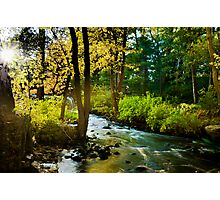 Walpole Town Forest  Photographic Print