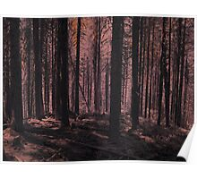 Infrared Woods Poster