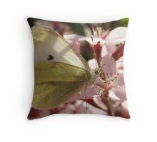 Cabbage White Butterfly - Adelaide, Australia Throw Pillow