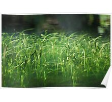 water world in the woods Poster