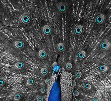Elegantly Blue by jermesky