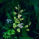 Beautiful Weeds by gigglemonster
