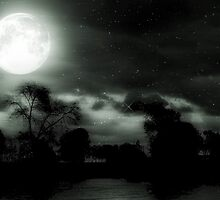 Nature's Night Light © by Dawn M. Becker