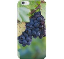 grape and vineyard iPhone Case/Skin