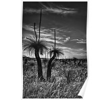 Grass Tree Sundowner Poster