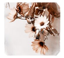Flowers Art Poster Photographic Print