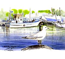 Seagull: Hout Bay, Capetown Photographic Print