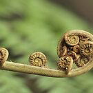 Unfurling Frond by John  Kowalski