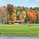 Autumn And The Geese by Deborah  Benoit