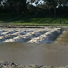 Darling River Waves. by Ross Campbell