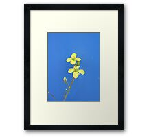 Yellow on blue background Framed Print