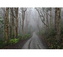 The Road to Mt Toolebewong Photographic Print