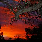 Eucalyptus in sunset by yeuxdechat