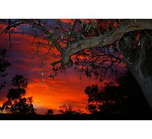 Eucalyptus in sunset Photographic Print