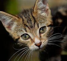 Cats eyes by evelynlarner