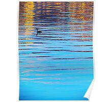 bird in a lake Poster