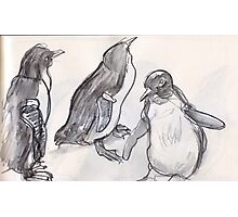 Fairy Penguins at Melbourne Zoo. Photographic Print