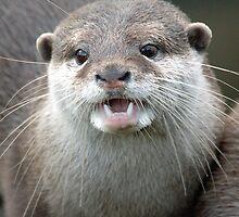 Otter. by Darren Evans