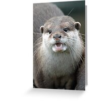 Otter. Greeting Card