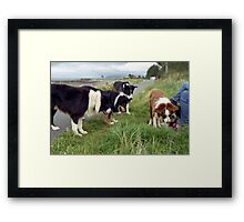 The World is full of Collies Framed Print