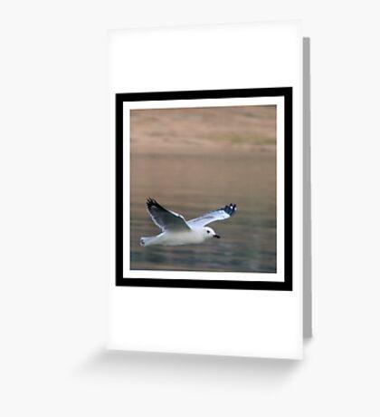 Hume Gull Greeting Card