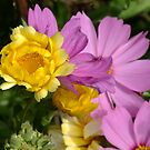 Calendula and Cosmos by Tracy Wazny