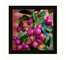 Berry Pink.... Art Print