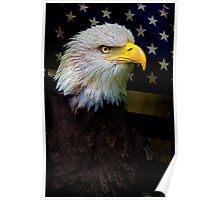 American Bald Eagle, USA Poster