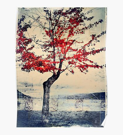 The Red Tree at Okanagan Lake Poster