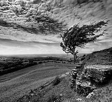 Endeavour by Jonathan Thomas