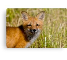 Fox Kit 4 Metal Print