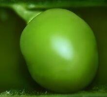 green pea by TickerGirl