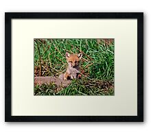 Who can resist this face - Ottawa, Ontario Framed Print