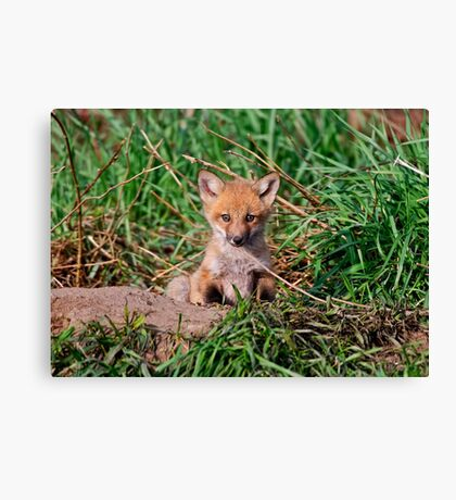 Who can resist this face - Ottawa, Ontario Canvas Print