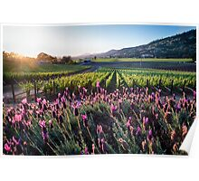 Grapevines and Pink Flowers, Poster