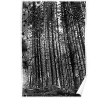 Caledonian Pines Poster