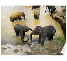 ELEPHANT AFFECTION. 2 Poster