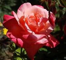 Summers day rose by linzi200