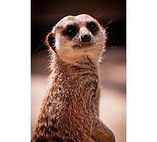 What you looking at? - Mia Cat - Adelaide Zoo Photographic Print
