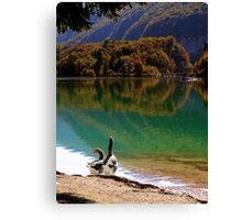 Geese on the shore of a mountain lake Canvas Print