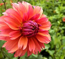 dahlia - coiffed! by Linda  Makiej