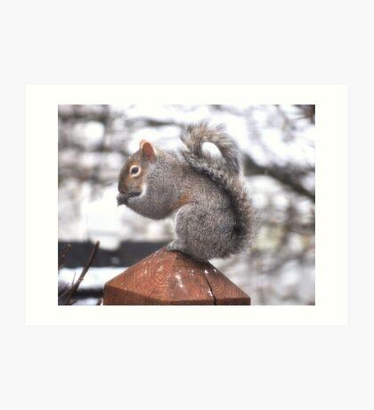 Grey Squirrel on a Post Art Print