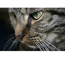 The eye of the tiger Photographic Print