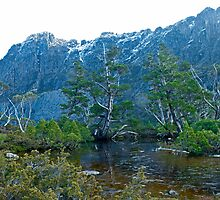 Artists Pool, Cradle Mountain by andychiz