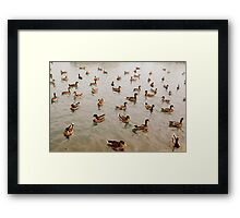 Just when you thought it was safe to go back in the water... Framed Print