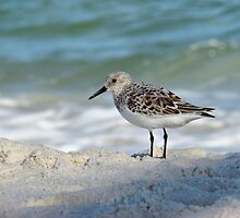 Little Sandpiper by Sandy Keeton