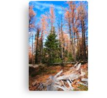 Autumnal woods Canvas Print