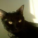 vogue by catnip addict manor